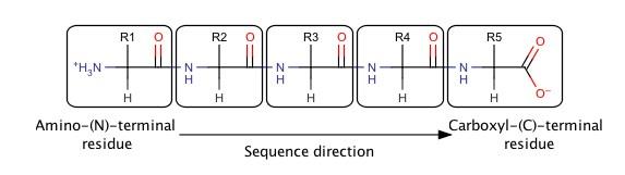 Pentapeptide